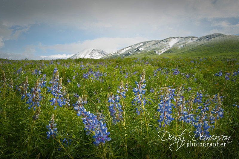 Snow on Gothic Mountain with Lupine below.