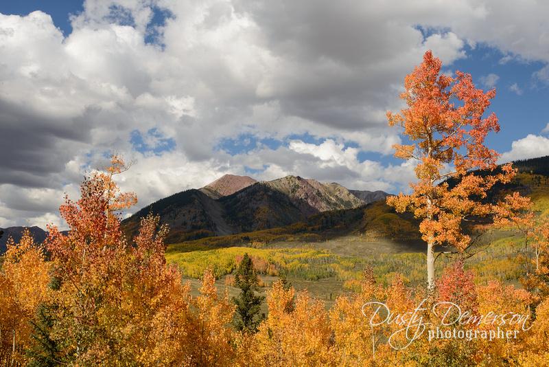 East River Fall Color Near Gothic Colorado
