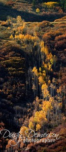 Fall color in the Black Canyon of the Gunnison National Park
