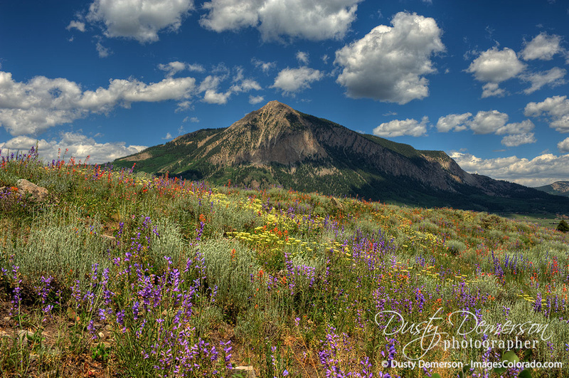 Crested Butte Mountain and wildflowers