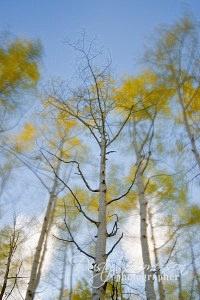 Autumn Wind 2