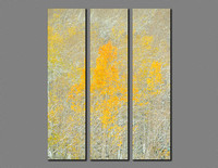 fall aspen forest triptych photograph