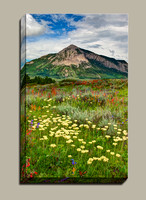 wildflowers below Crested Butte Mountain in summer