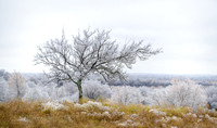 a fall storm leaves the landscape covered with ice in Oklahoma