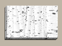 White-aspen-forest-trees