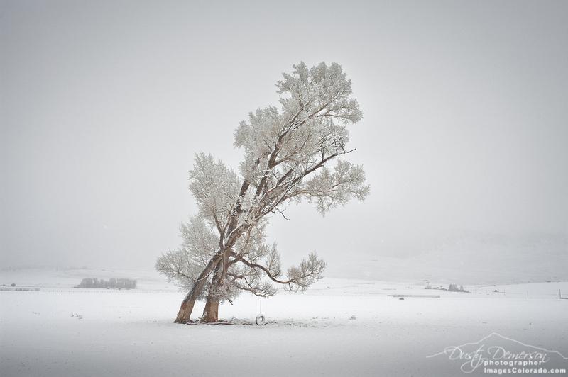 Snow Tango 2