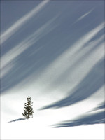 A single small pine tree is threatened by shadows on a steep hillside