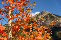 Autumn Reds and Crested Butte