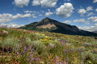 Crested Butte Mountain Wildflowers