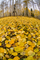 Aspen Leaf Carpet