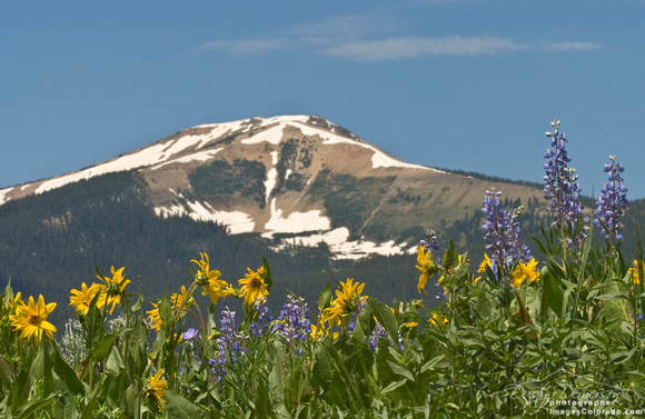 colorado stock photography - mount emmons wildflowers