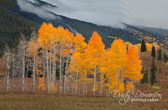 Kebler Pass Fall Colors